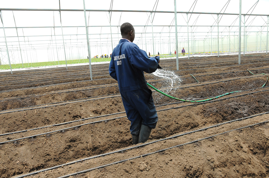GreenHouse-Preparation-For-Planting