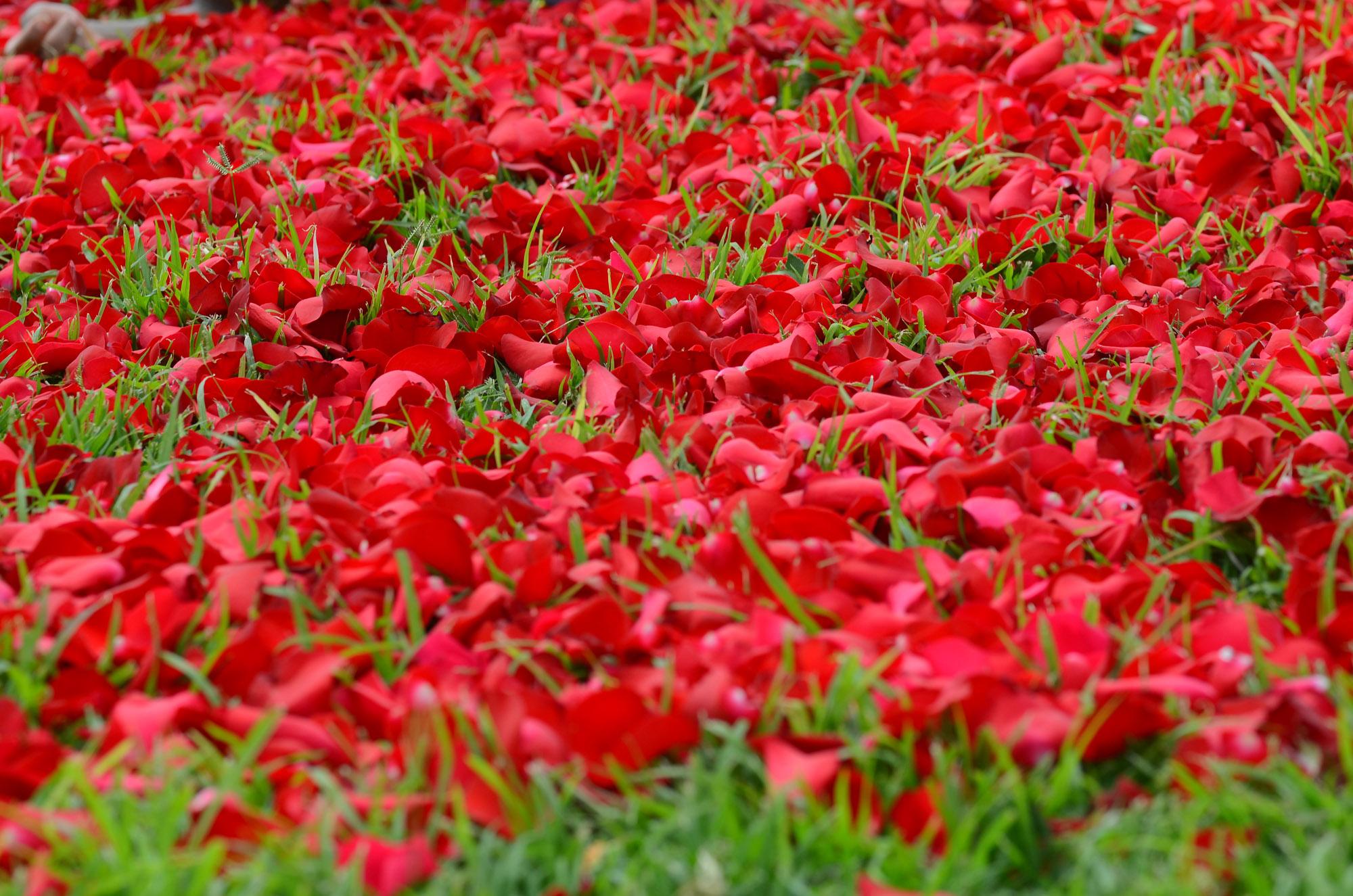 PJ Dave Flora Rose Petals