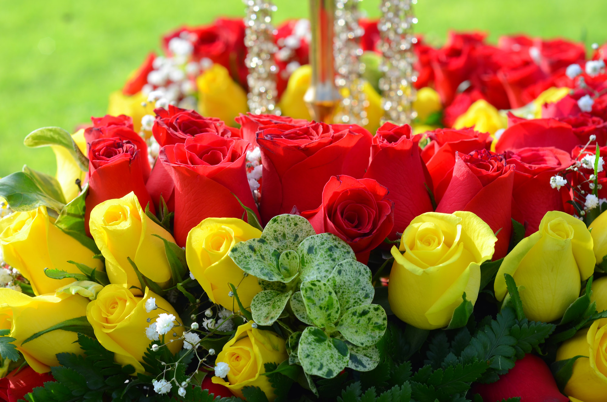 PJ Dave Flora Roses
