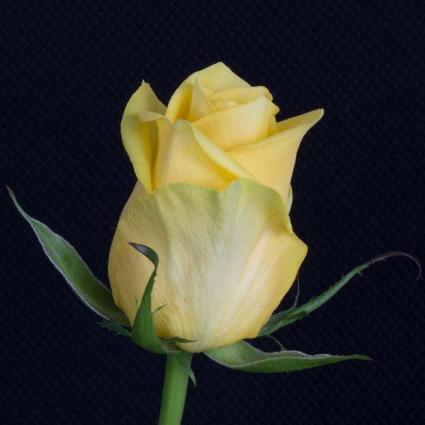 Yelloween-1