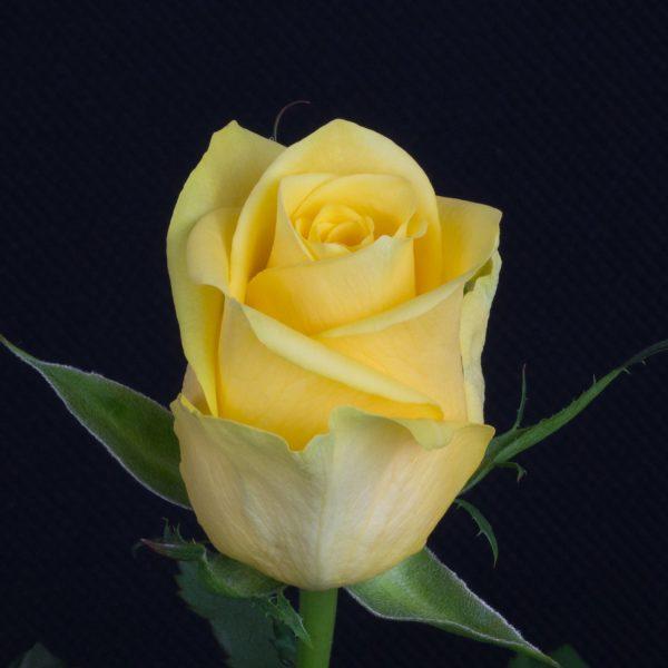 Yelloween-2