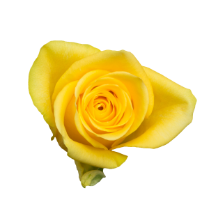 Yelloween A