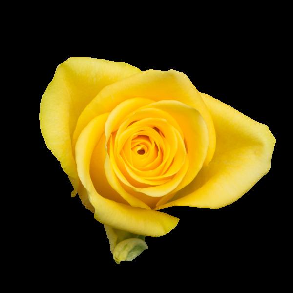 Yelloween-A